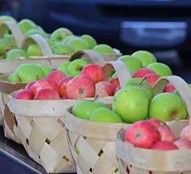 apple_fest
