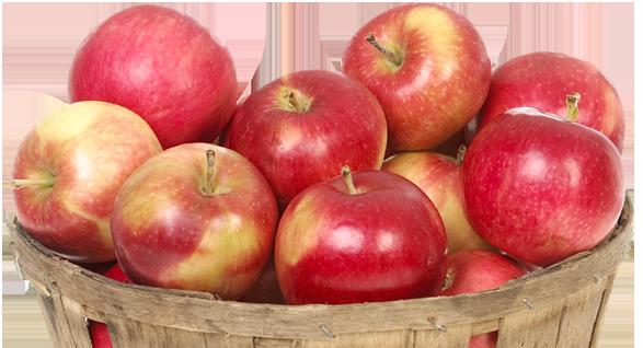 saturday nc apple festival